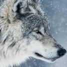 Emis_Wolf