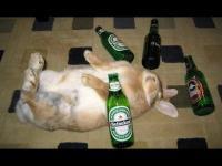 Drunky_Bunny
